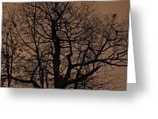 Oak Silhouette  Greeting Card