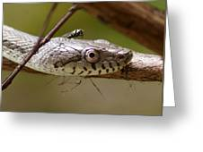 Oak Snake And Fly Greeting Card
