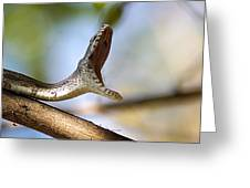 Oak Snake  Greeting Card