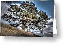Oak Tree And Moon Greeting Card