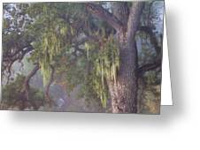 Oak Tree And Spanish Moss In The Mist Greeting Card