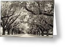 Oak Trees Of Charleston South Carolina In Sepia Greeting Card