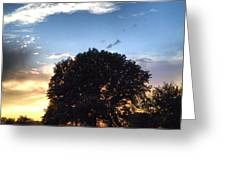 Oak Tree At The Magic Hour Greeting Card