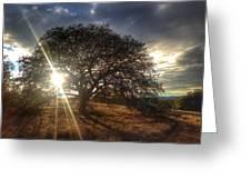 Oak Tree At The Plateau Greeting Card