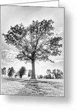 Oak Tree Bw Greeting Card