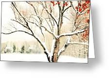Oak Tree In Winter Greeting Card by Dorothy Walker
