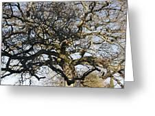 Oak Tree In Winter Greeting Card