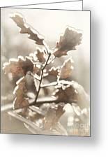 Oak Tree Leaves Frozen In Ice Greeting Card