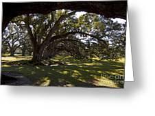 Oak Trees   #5794 Greeting Card