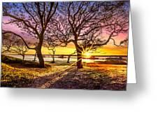 Oak Trees At Sunrise Greeting Card