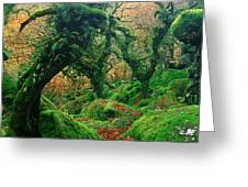 Oak Trees In A Forest, Wistmans Wood Greeting Card