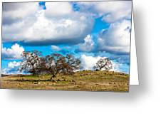 Oaks And Clouds Greeting Card