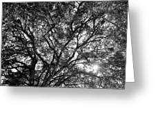 Oak's Web Greeting Card