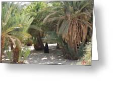 Oase Rest Desert Sinai Egypt Greeting Card