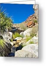 Oasis On Borrego Palm Canyon Trail In Anza-borrego Desert Sp-ca Greeting Card