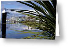 Obscured View Of Percival Landing Greeting Card