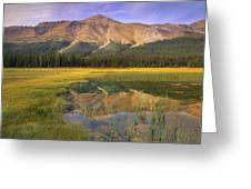 Observation Peak And Coniferous Forest Greeting Card