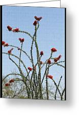 Ocatillo With Red Blossoms Greeting Card