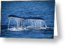 Ocean Dive Of The Humpback Whale Greeting Card
