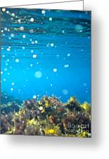 Ocean Garden Greeting Card