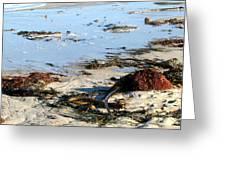 Ocean Life On The Beach Greeting Card