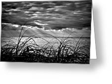 Ocean Rays Black And White Greeting Card