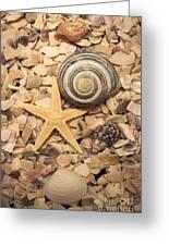 Ocean Treasure Trove Greeting Card