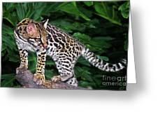 Ocelot Felis Pardalis Wildlife Rescue Greeting Card