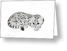Ocelot Kitten Greeting Card