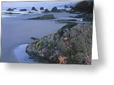 Ochre Sea Stars At Low Tide Miwok Beach Greeting Card