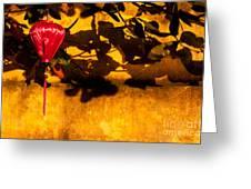 Ochre Wall Silk Lantern 02 Greeting Card