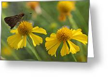 Ocola Skipper Greeting Card by April Wietrecki Green
