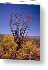 Ocotillo And Palo Verde Greeting Card