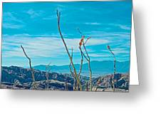 Ocotillo At Top Of Ladder Canyon With Salton Sea In Distance In Mecca Hills-ca Greeting Card