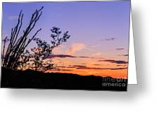 Ocotillo Sunset Greeting Card