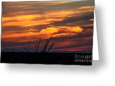 Ocotillo Sunset Greeting Card by Robert Bales