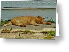 Ocracoke Cat 8/04 Greeting Card
