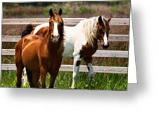 Ocracoke Ponies Greeting Card