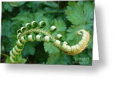 Octo-fern Greeting Card