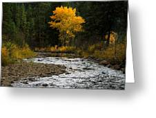 October Beauty Along Grimes Creek Greeting Card