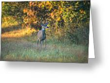 October Buck Greeting Card