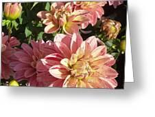 October Dahlia Field Greeting Card