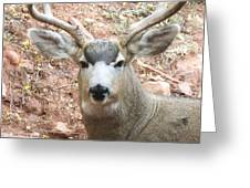 October Deer Greeting Card