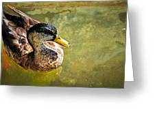 October Duck Greeting Card