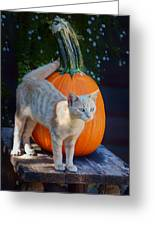 October Kitten #1 Greeting Card