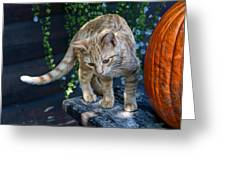 October Kitten #2 Greeting Card