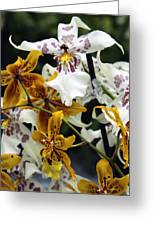 Gold And White Orchids Greeting Card