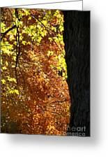 October Tree Greeting Card