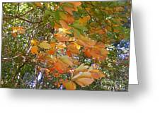 October Wind  Greeting Card