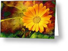 October Zinnia Greeting Card